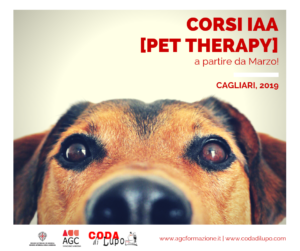pet-therapy-instagram-fb-post